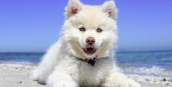 Exotic Female Puppy Names