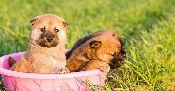 Adorable boy puppy names-2