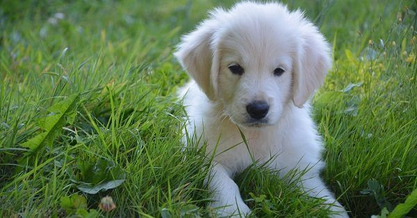 Adorable puppy names