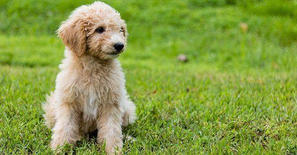 Alaskan female dog names