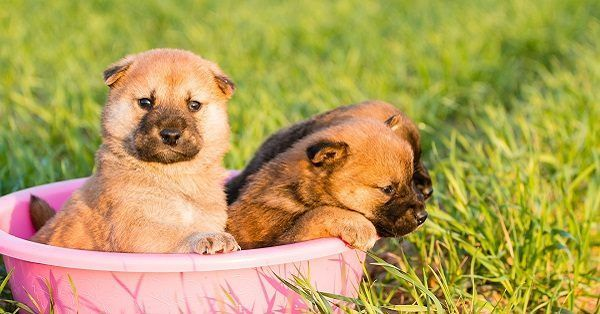 Australian girl puppy names