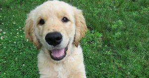 Beautiful male dog names