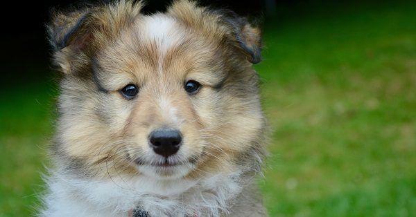 Best italian female dog names