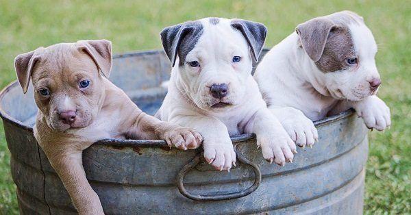 Big white dog names-2