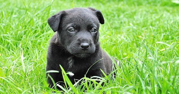 Chinese puppy names