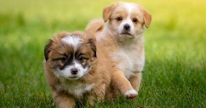 Common male dog names