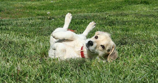 Cool boy puppy names