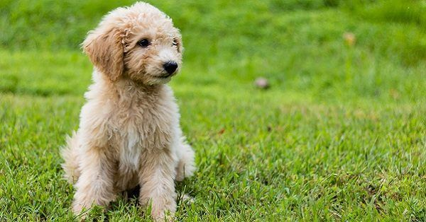 Cool names for small male dogs
