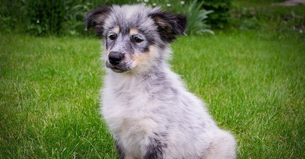 Cute italian puppy names