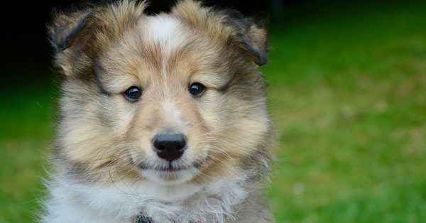 Cute korean puppy names