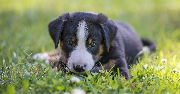 English dog names for male puppies
