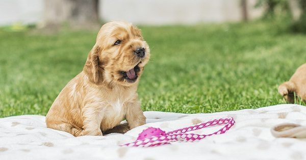 Famous dog names male puppies