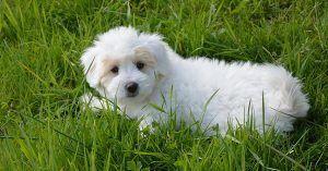 Female dog names with blue eyes