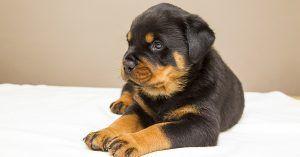 Fluffy boy dog names