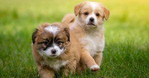 Fluffy dog names female