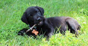 Food dog names girl-2