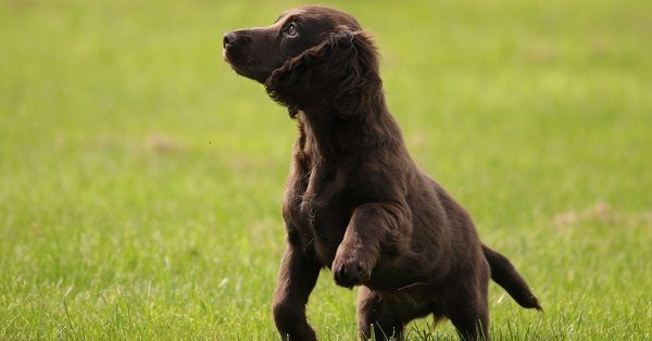 Funny black dog names