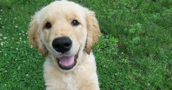 Funny puppy names boy