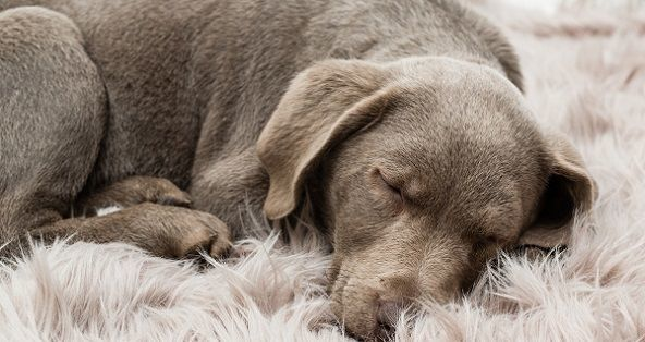 Irish dog names female puppies