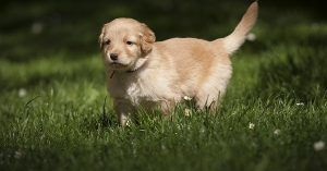 Male dog names that start with m