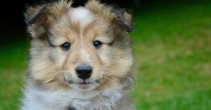 Nautical female dog names-2