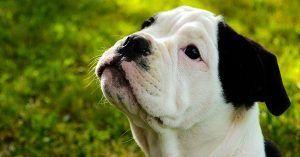 One Syllable Boy Dog Names