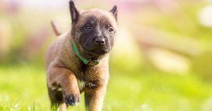 Small female dog names unique