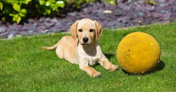 Spanish girl puppy names