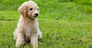 Special dog names with meanings