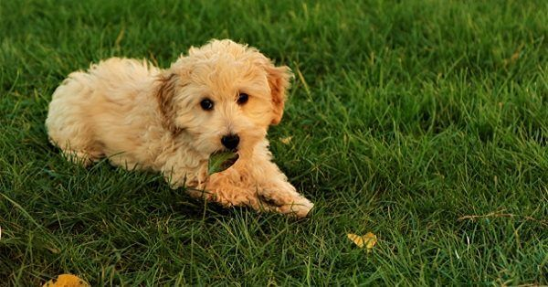 Top 100 puppy names