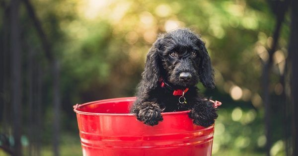 Top 10 puppy names