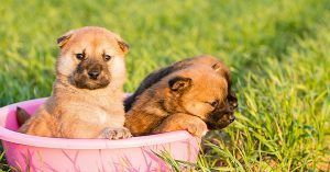 Unique strong dog names