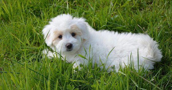 White female dog names