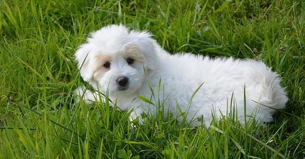 White fluffy dog names