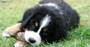 Boy dog names a to z