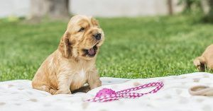 Dog names that mean lucky 2