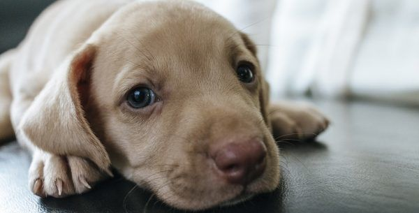 Sassy Puppy Names Female
