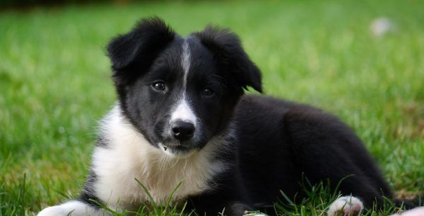Cute Dog Names Starting With D