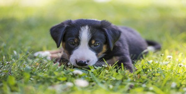Strong Puppy Names male