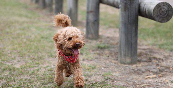 Christmas Dog Names Puppies