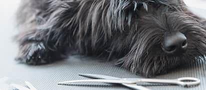 hondenverzekering-aanvullende-wensen