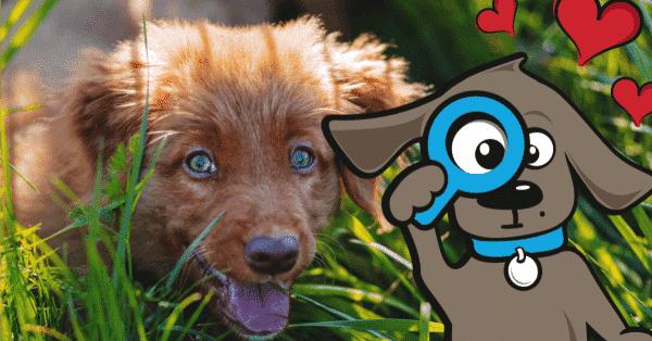 5 dingen die we van onze honden kunnen leren