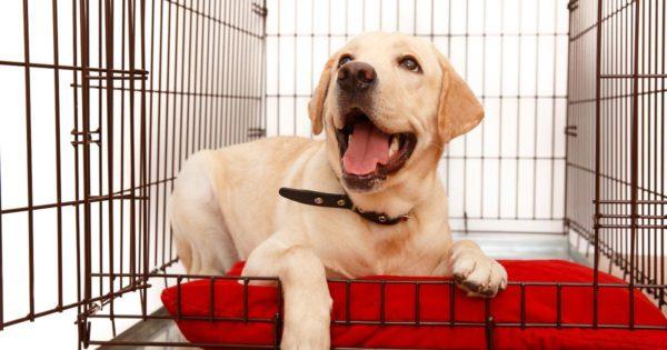 Mijn-puppy-blaft-in-de-bench