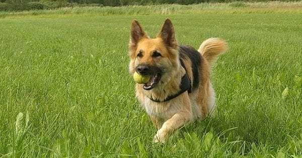 trainen-hond