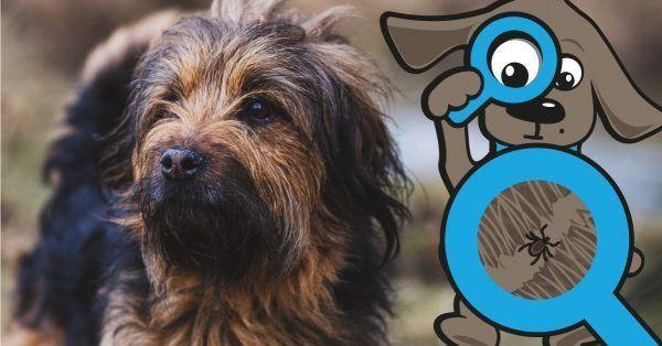 Alles over teken bij honden