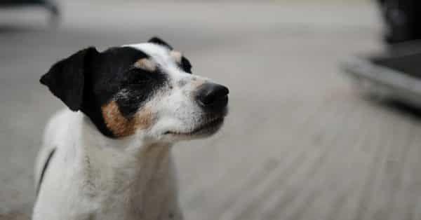 Wanneer heeft jouw hond een slechte vacht?
