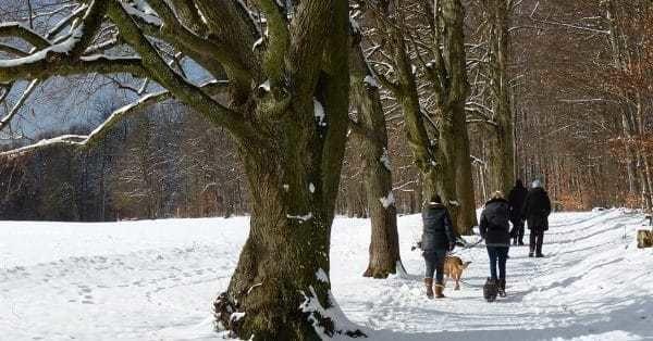 boswandeling maken met je hond