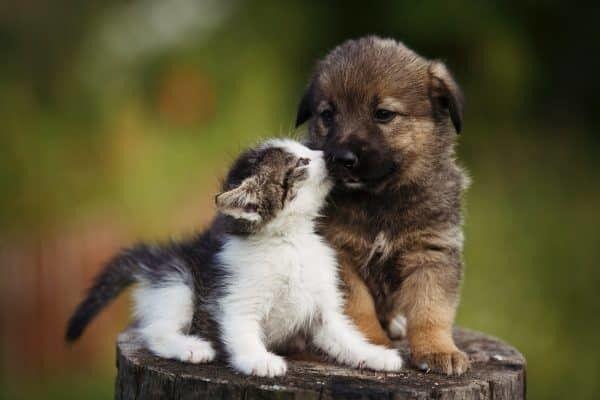 dierenverzekering-vergelijken
