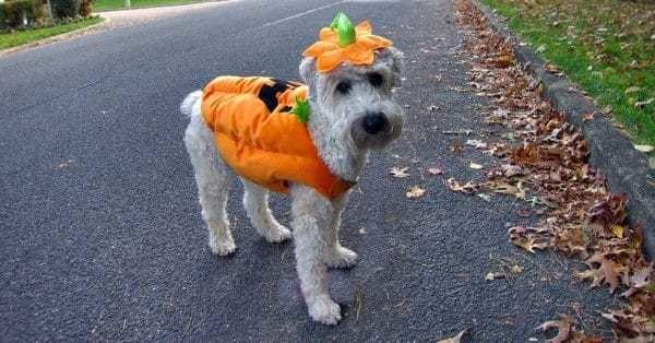 halloween kostuum 30 redenen waarom wel en niet