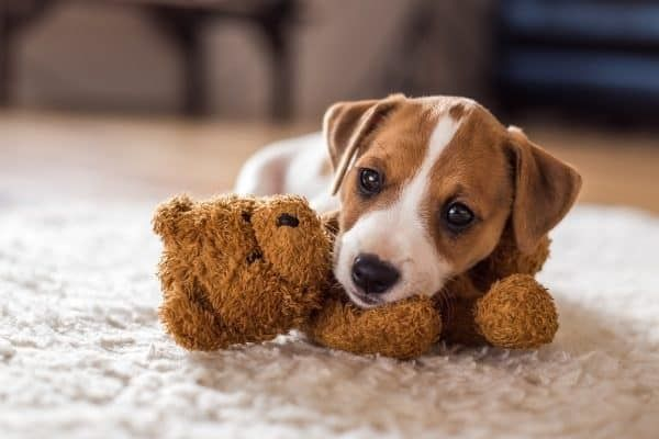 huisdierverzekering-leeftijd
